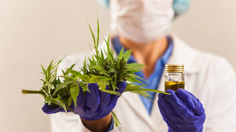 Léčivé konopí se používá v různých mastičkách. Hlídejte si v nich obsah konopí: čím více, tím lépe.