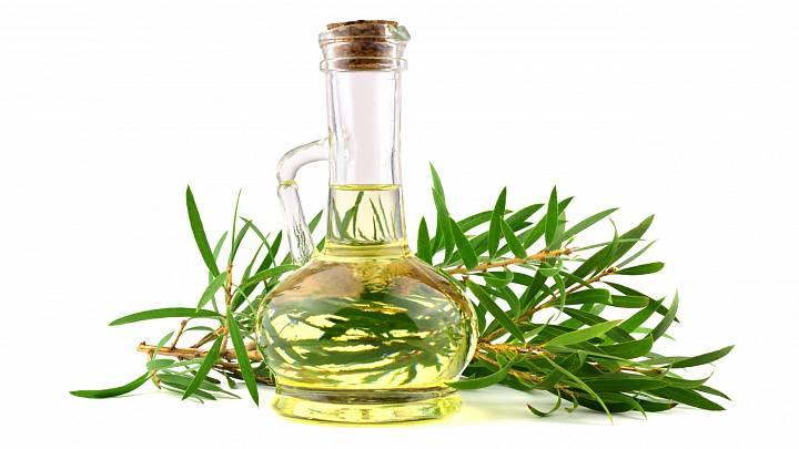 Cajeputový olej – zázrak z Dálného východu