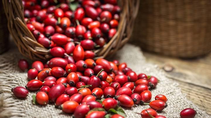 Na které bylinky a jedlé plody se vypravit na podzim