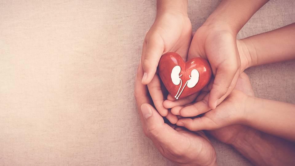 Posilujte kořeny: svoje ledviny