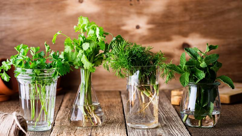 Čerstvých bylinek se nemusíte vzdát ani v zimě