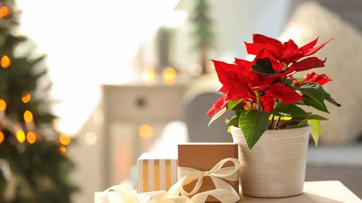 Příběh ukrytý za vánoční hvězdou