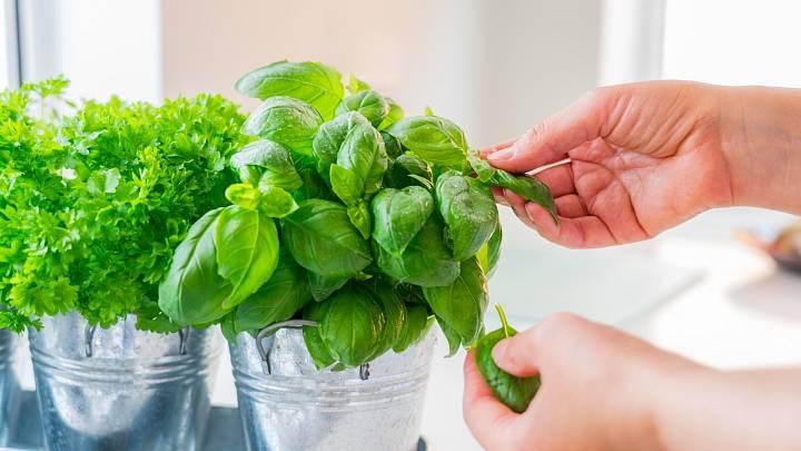 Jak se v létě ochladit pomocí bylinek