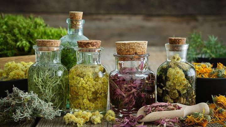 5 bylinných doplňků stravy pro silnou imunitu