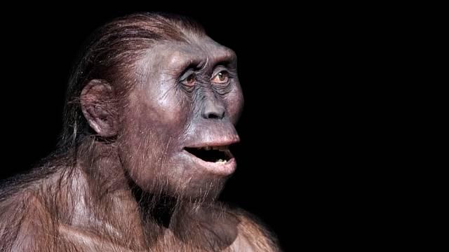 Vědci objevili lebku pravěkého člověka