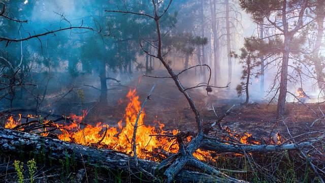 Kvůli neopatrnosti lidí každoročně vznikají stovky požárů.