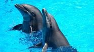 Zdůvodu bezpečnosti se také delfíni při spánku drží pohromadě.