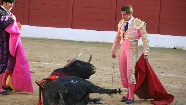 Býk klesá k zemi. Tento zápas je u konce a další může začít...
