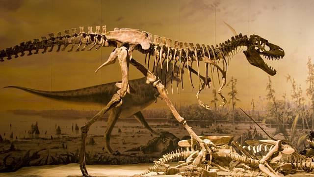 Rekonstrukce kostry pro muzejní expozici bylo možné vytvořit jen vzpřímenou, ale tyrannosaurus vzpřímeně nechodil.