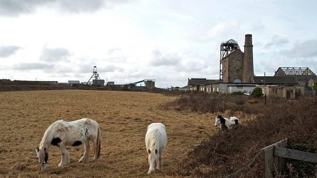 Důlní koně na pastvě, jež jim byla dopřána jen zřídka.