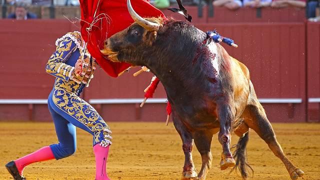 Vlády zemí provozující tyto slavnosti byly od roku 2000 několikrát donuceny zápasy zakázat