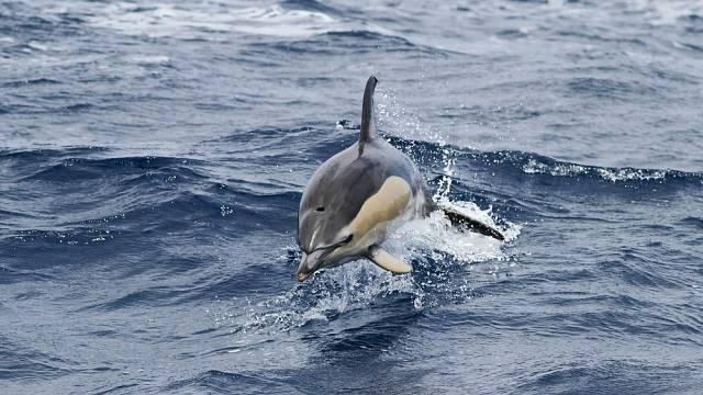 Stejně jako člověk, i delfín ve snu dýchá.