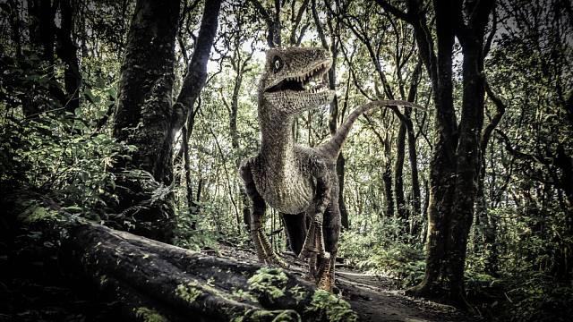 Podle paleontologů se mohl styl lovu velociraptorů podobat dnešnímu komodskému drakovi