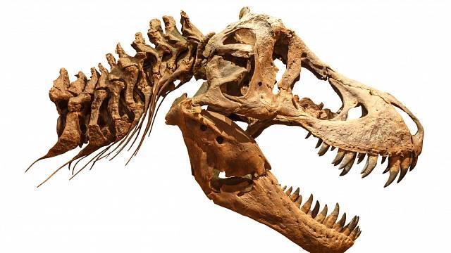 Lebka T-rexe byla obrovská.