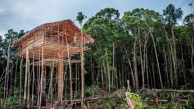 Výstavba domu ve stromě je prestižní záležitost