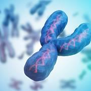 Původ člověka lze dohledat pomocí analýzy mužského chromozomu Y.