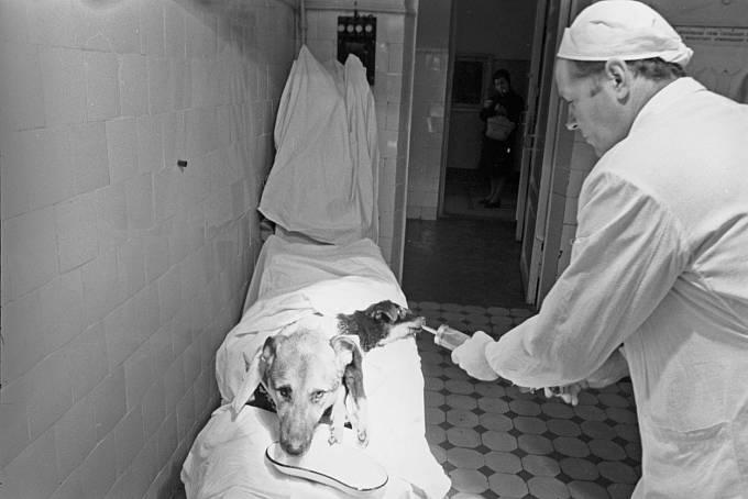 Děmichovův dlouhlavý pes šokoval svět.