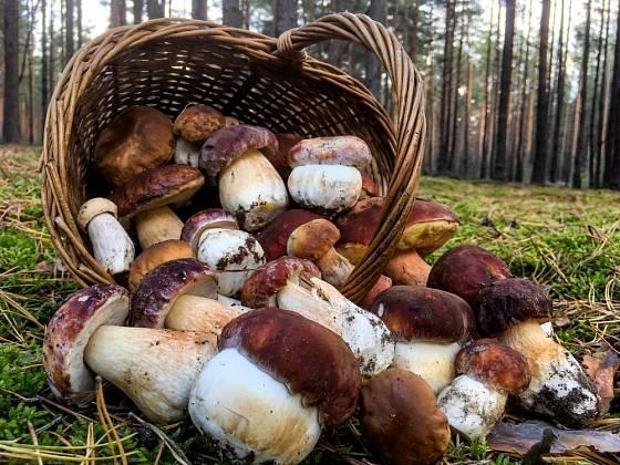 Na některých místech v republice si houbaři na nedostatek nemůžou stěžovat.