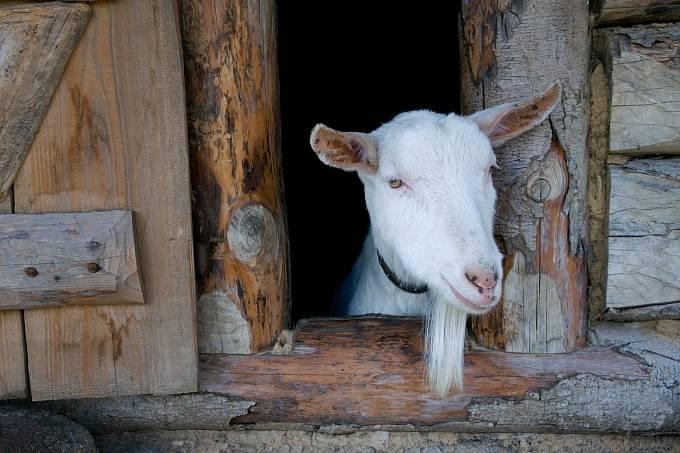 Lidé žili v těsném sepětí s přírodou i hospodářskými zvířaty.