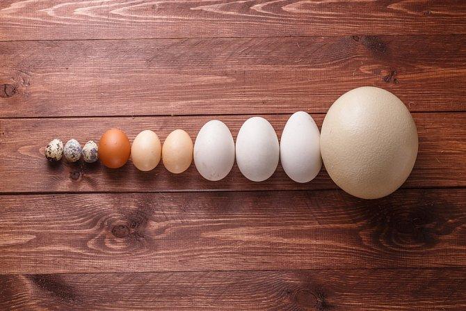 Nebojte se vajec - od křepelčích po pštrosí.