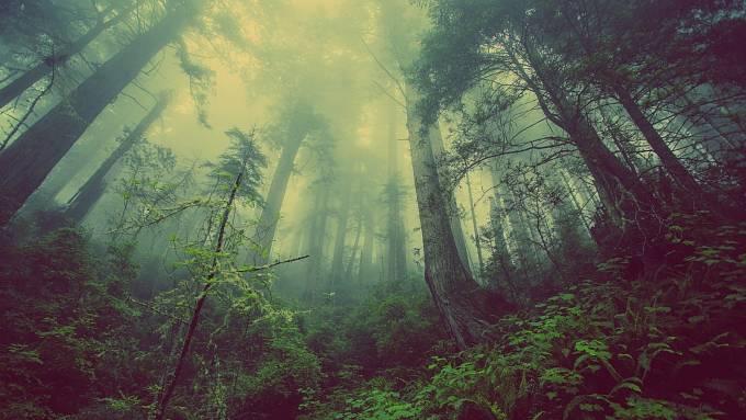V průběhu 13. století se začali zapisovat první majitelé jednotlivých lesů