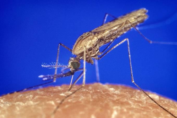 Anofeles je rod hmyzu z čeledi komárovitých. Některé druhy jsou známé jako přenašeči malárie.