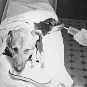 Dvouhlavý pes doktora Děmichova