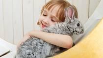 Terapeutické účinky zvířat uznával už Sigmund Freud