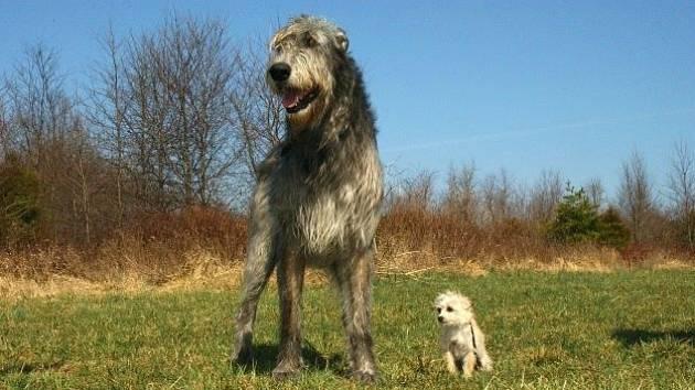 Krátký život psů