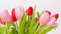 Květiny jsou známkou dvoření