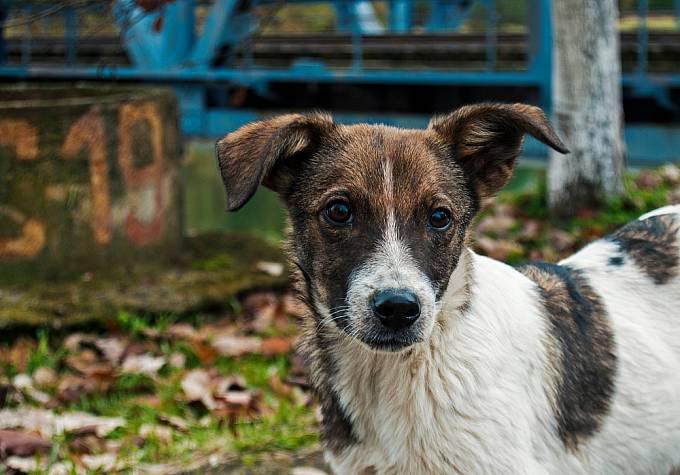 """Likvidátoři havárie v Černobylu dávali toulavým psům příznačná jména jako """"Radiace"""" nebo """"Rentgen""""."""