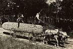 Kdopak před 100 lety asi uvěřil, že je ta kukuřice pravá?