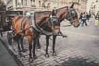 Na koně nedali lidé dopustit, uklízet po nich se jim ale nechtělo.