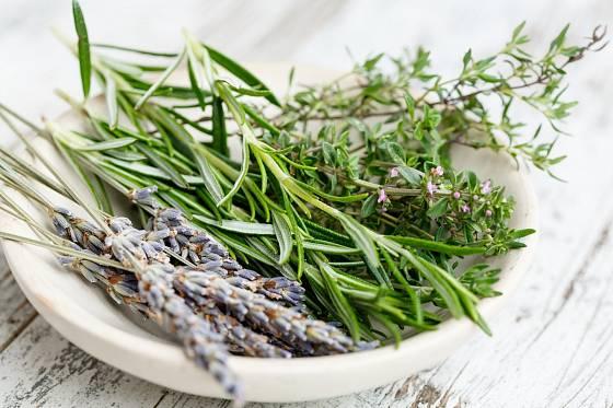 Mnohé bylinky mohou nahradit antibiotika, stejně tak koření.