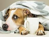 Pití kávy může psa ohrozit na životě.