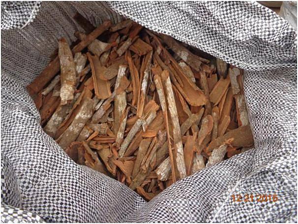 Kůra chinovníku (Cinchona succirubra) obsahuje chinin.