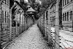 Osvětim (německy Auschwitz) byl největším nacistickým koncentračním a vyhlazovacím táborem.