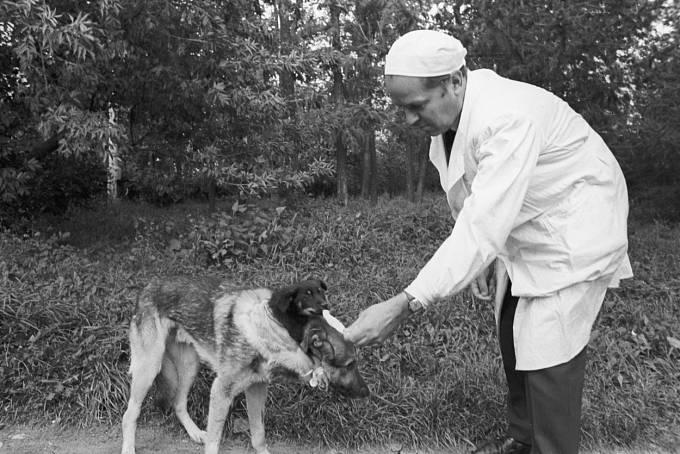 Děmichovův dvouhlavý pes přežil necelé čtyři dny.