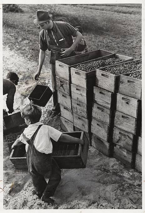 V USA bylo běžné zaměstnávat děti ještě v roce 1939.