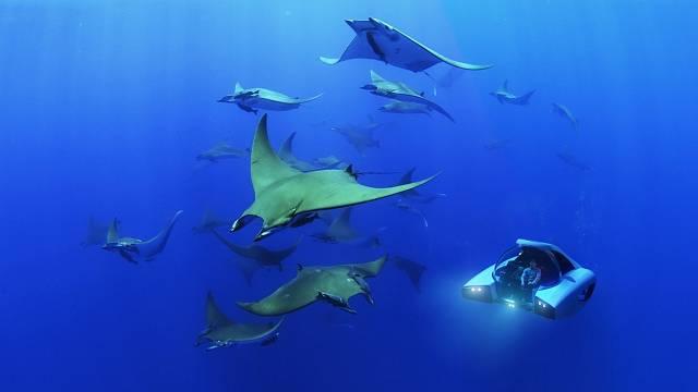 Ponorka se ponoří do hloubky až 100 metrů a plavit se mezi rybami můžete až 8 hodin