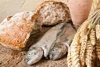 Do chleba se dávalo málo mouky, prodávaly se leklé ryby.
