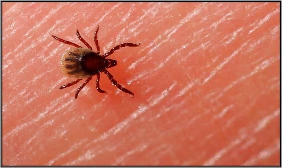 Klíšťata přenáší nebezpečné virové onemocnění
