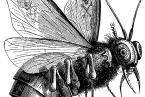 Belzebub od Collina de Plancyho z jeho knihy Dictionnaire Infernal. Jméno se nejčastěji interpretuje jako pán much, protože lidé věřili, že hejna much, která je sužovala, musí být výplodem ďábla.