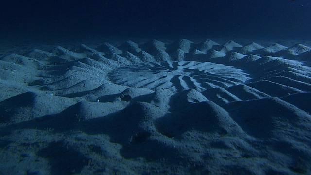 Kruhy na dně oceánu, Japonsko