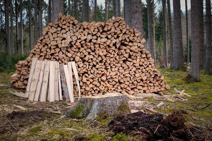 Marie Terezie zakázala vývoz dřeva do ciziny