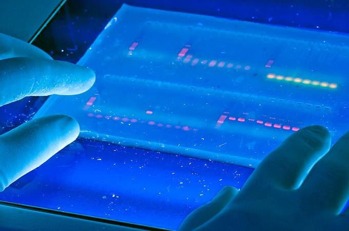 Moderní genetická analýza je založená na analýze genetického materiálu v podobě DNA