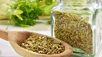 Fenyklové semínko klíšťata odhání.