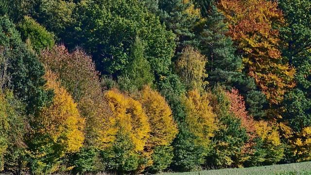 Les je magický prostor, který byl odpradávna spojován s obživou, útočištěm