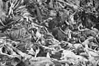 Hromady těl v Bergen-Belsenu