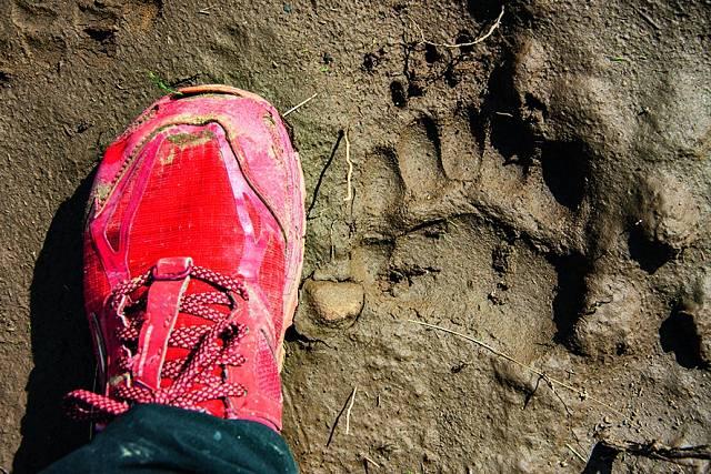 Chodila i v medvědích stopách...